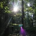 Der erste Sonnenstrahl (2)