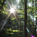 Der erste Sonnenstrahl (3)