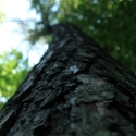 Der ewige Baum