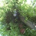 Baum_mit_Lichtpunkten01