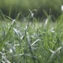 Gras 2